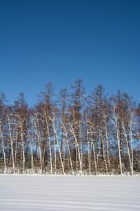冬の雑木林と青空の写真素材 [FYI03443443]