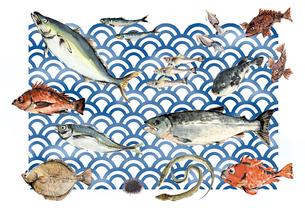 いろいろな魚 魚介類のイラスト素材 [FYI03443788]