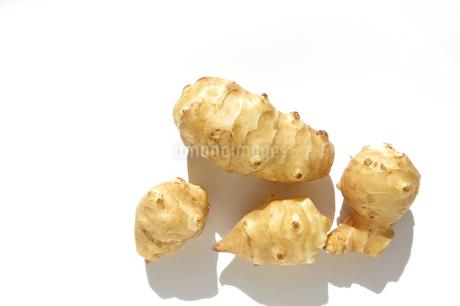 菊芋 キクイモの写真素材 [FYI03443964]