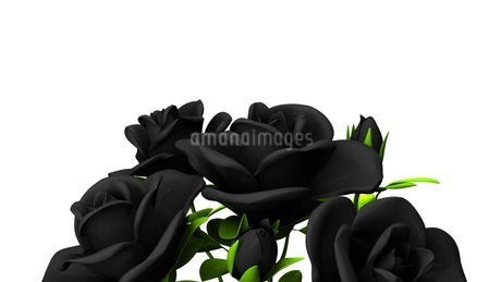 Black roses  bouquet on white text spaceのイラスト素材 [FYI03444058]