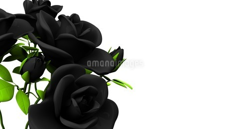 Black roses  bouquet on white text spaceのイラスト素材 [FYI03444059]