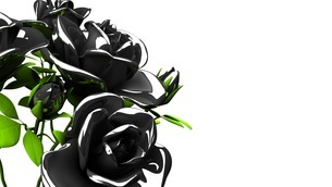 Black roses  bouquet on white text spaceのイラスト素材 [FYI03444060]