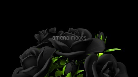 Black roses  bouquet on black text spaceのイラスト素材 [FYI03444061]