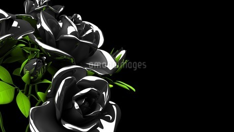 Black roses  bouquet on black text spaceのイラスト素材 [FYI03444062]