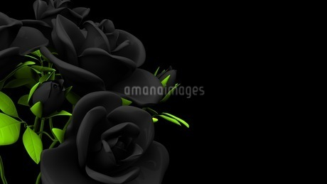 Black roses  bouquet on black text spaceのイラスト素材 [FYI03444063]