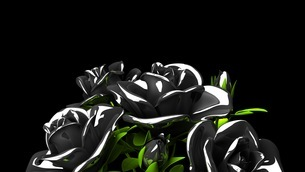 Black roses  bouquet on black text spaceのイラスト素材 [FYI03444064]