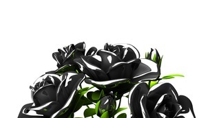 Black roses  bouquet on white text spaceのイラスト素材 [FYI03444065]