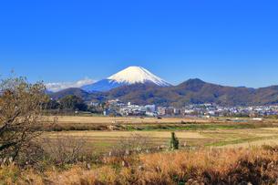 富士山と冬の田んぼの写真素材 [FYI03444083]
