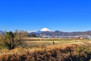 富士山と冬の田んぼの写真素材 [FYI03444084]