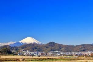 富士山と冬の田んぼの写真素材 [FYI03444085]