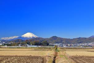 富士山と冬の田んぼの写真素材 [FYI03444086]