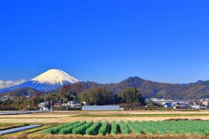 富士山と丹沢の写真素材 [FYI03444098]