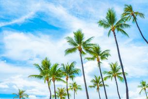 ハワイ 青空の下のヤシの木の写真素材 [FYI03444424]