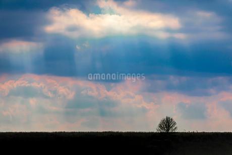 秋の草原の写真素材 [FYI03444676]
