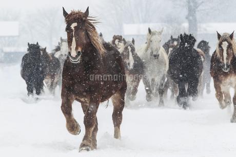 冬の馬の写真素材 [FYI03444683]