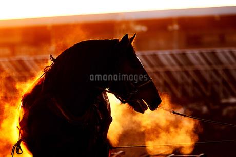 冬の馬の写真素材 [FYI03444688]