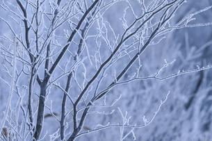 冬の風景の写真素材 [FYI03444691]