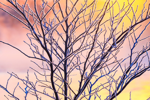 冬の早朝の写真素材 [FYI03444694]