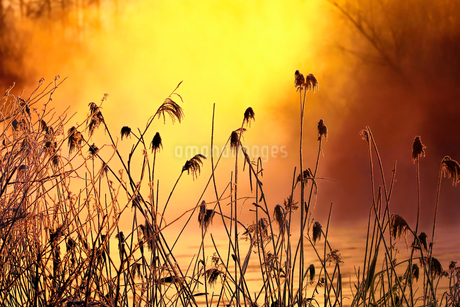 冬の水辺の写真素材 [FYI03444696]