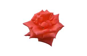 赤いパラのグラフィック素材の写真素材 [FYI03444991]
