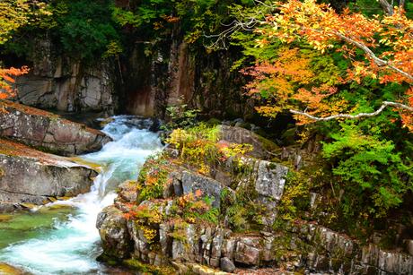 照葉峡の紅葉   白龍の滝の写真素材 [FYI03445032]