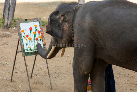 メーサーエレファントキャンプ 象のお絵かきの写真素材 [FYI03445220]
