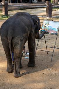 メーサーエレファントキャンプ 象のお絵かきの写真素材 [FYI03445221]
