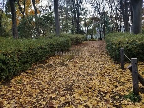 公園の写真素材 [FYI03445265]