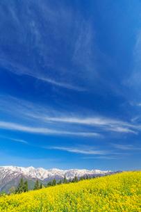 菜の花畑と白馬連峰とすじ雲の写真素材 [FYI03445374]