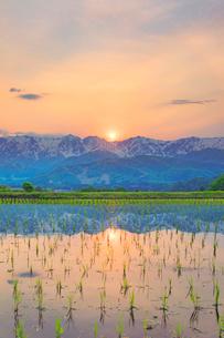 野平の田園と白馬連峰に沈む夕日の写真素材 [FYI03445377]