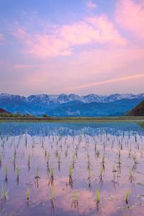野平の田園と白馬連峰と夕焼けの写真素材 [FYI03445378]