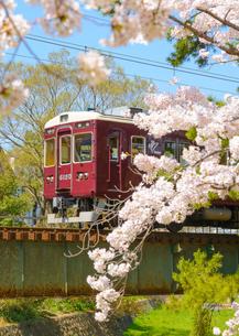 夙川公園の桜と阪急電車の写真素材 [FYI03445509]