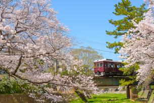 夙川公園の桜と阪急電車の写真素材 [FYI03445510]