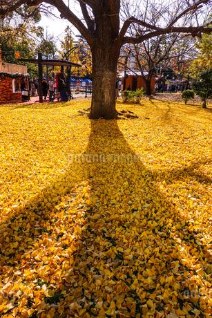 芝公園の紅葉の写真素材 [FYI03445644]
