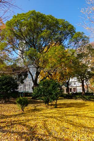 芝公園の紅葉の写真素材 [FYI03445645]