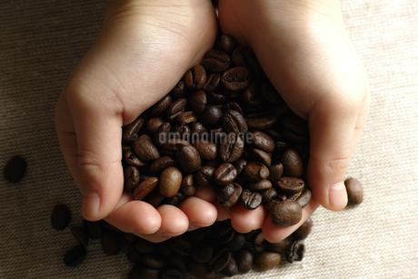 コーヒー豆を持つ手の写真素材 [FYI03445749]
