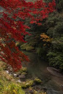 秋の渓谷の写真素材 [FYI03445767]