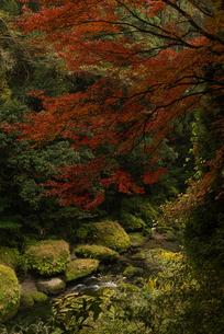 秋の渓谷の写真素材 [FYI03445769]