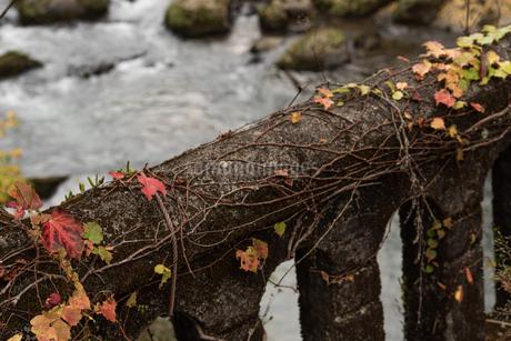 秋の橋の写真素材 [FYI03445770]