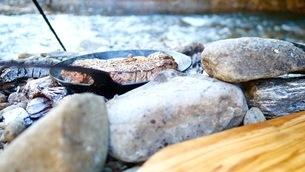 キャンプ場で炭火BBQをする(焼けた肉)の写真素材 [FYI03445784]