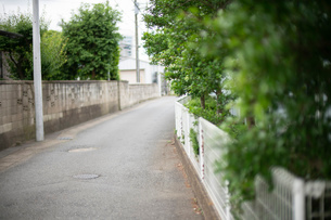 背景 路地 植物 前ボケ 曇り の写真素材 [FYI03445845]