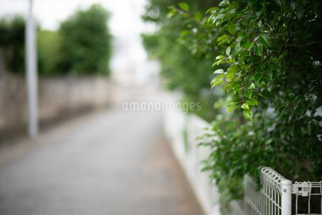 背景 路地 街路樹 後ボケの写真素材 [FYI03445847]