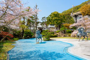 満開の桜と須磨寺の写真素材 [FYI03445870]