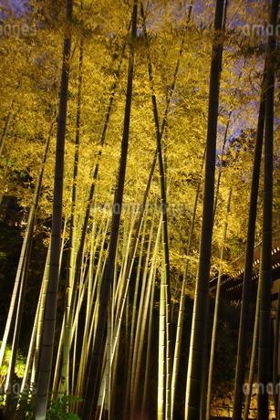 鎌倉の夜の写真素材 [FYI03445886]