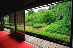 新緑の雲龍院の写真素材 [FYI03446416]
