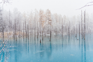 冬の青い池の写真素材 [FYI03446710]