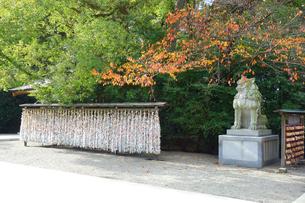神奈川県 寒川神社のみくじ結びの写真素材 [FYI03446748]