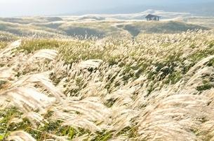 阿蘇 ススキの野原の写真素材 [FYI03447120]
