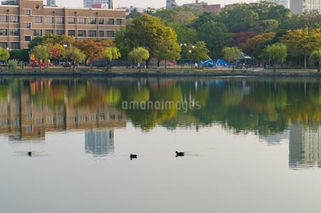朝の大濠公園の写真素材 [FYI03447124]