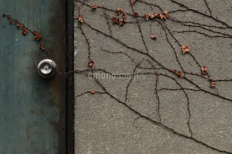 掠れた金属のドアとツタの絡まる壁の写真素材 [FYI03447138]
